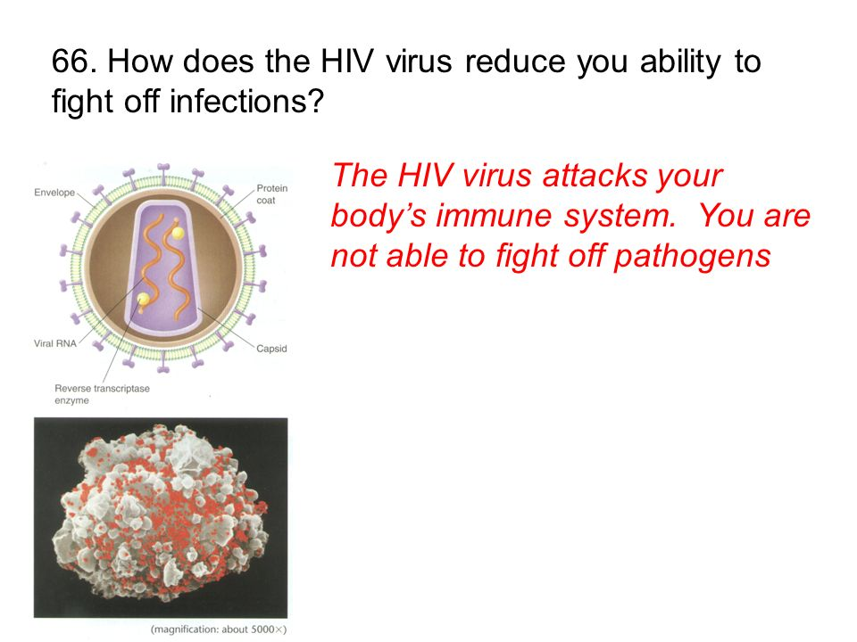 66. How does the HIV virus reduce you ability to fight off infections