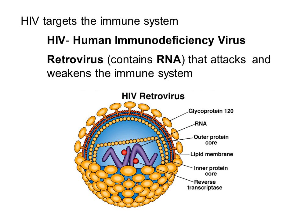 HIV targets the immune system