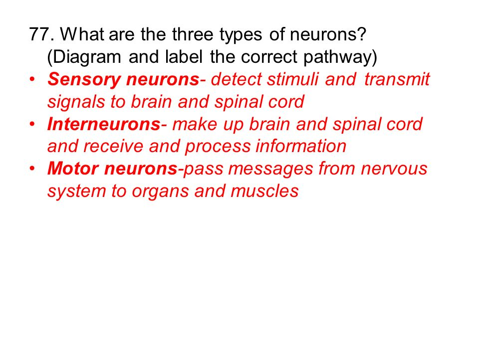 77. What are the three types of neurons