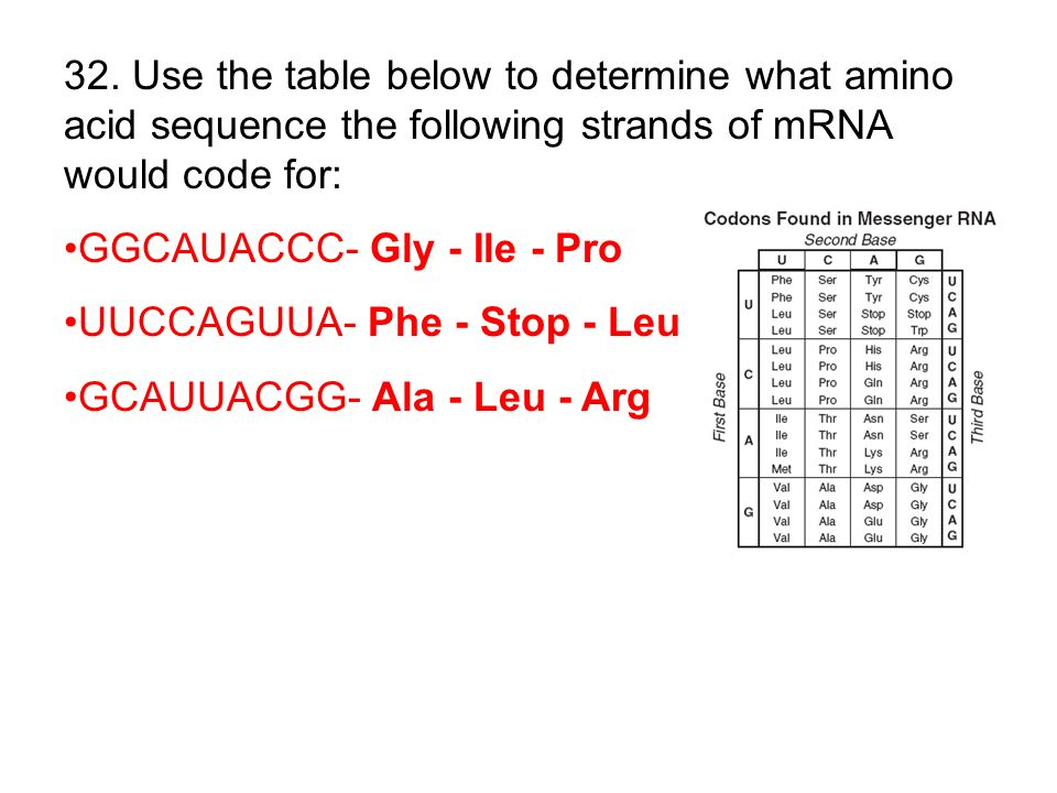 32. Use the table below to determine what amino acid sequence the following strands of mRNA would code for: