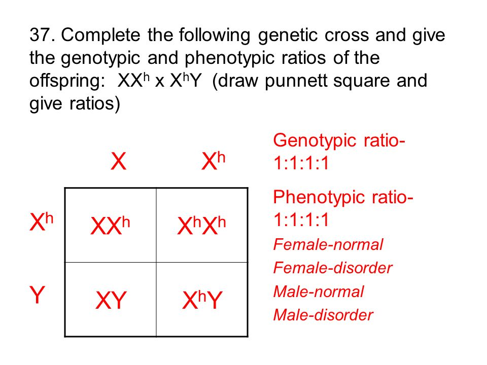 37. Complete the following genetic cross and give the genotypic and phenotypic ratios of the offspring: XXh x XhY (draw punnett square and give ratios)