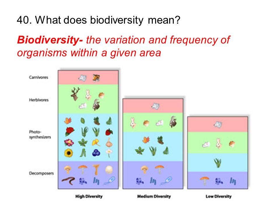 40. What does biodiversity mean