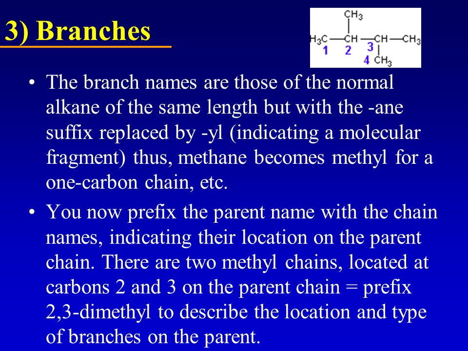 3) Branches