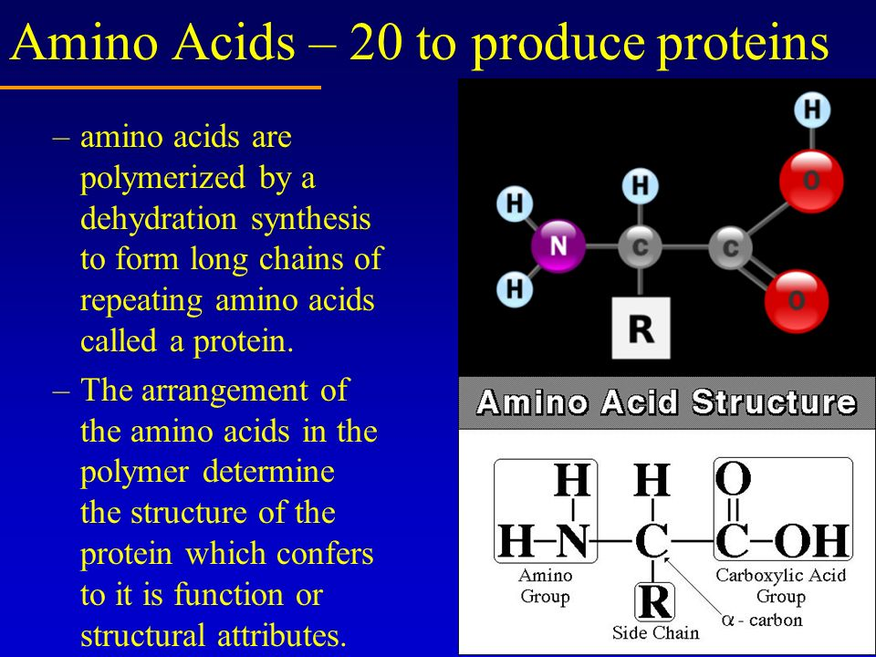 Amino Acids – 20 to produce proteins