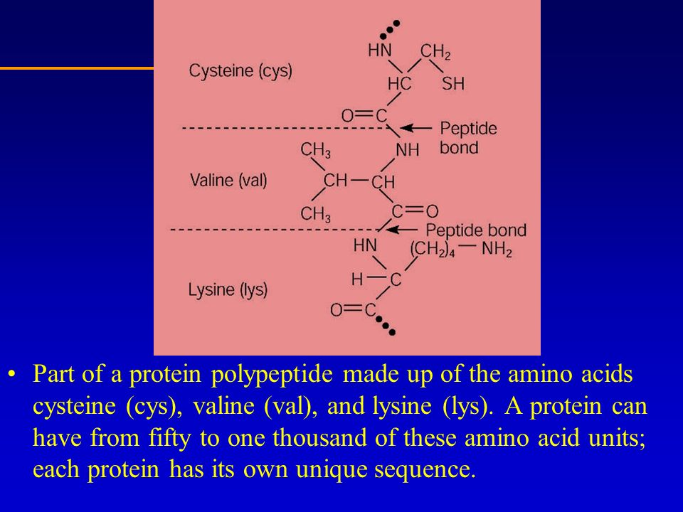 Part of a protein polypeptide made up of the amino acids cysteine (cys), valine (val), and lysine (lys).