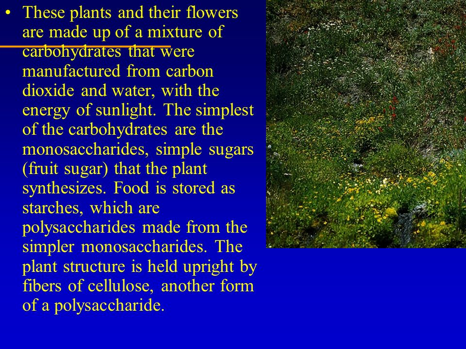 These plants and their flowers are made up of a mixture of carbohydrates that were manufactured from carbon dioxide and water, with the energy of sunlight.