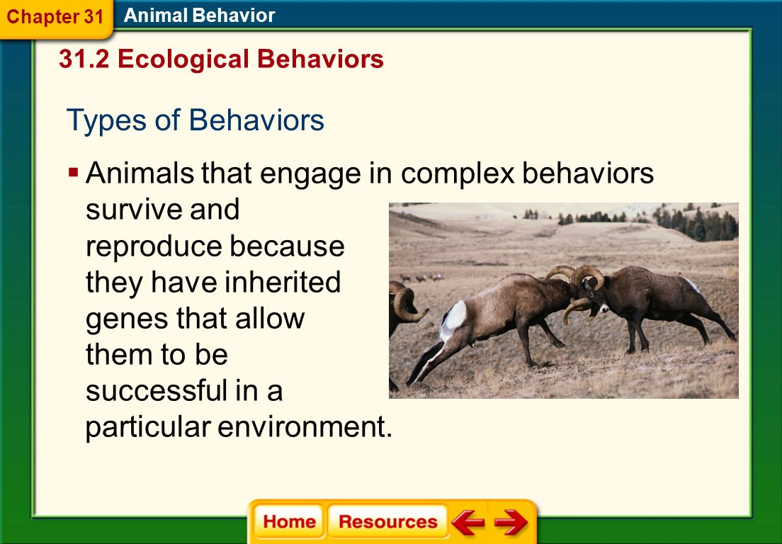 Animals that engage in complex behaviors survive and reproduce because