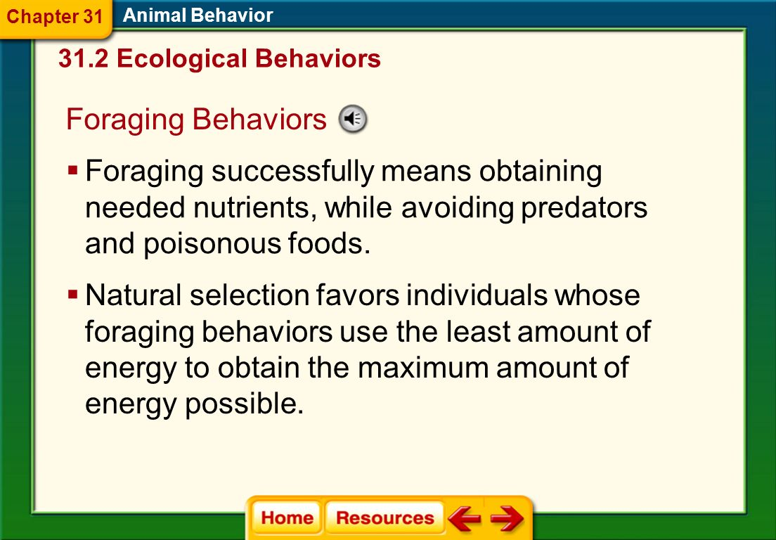 Chapter 31 Animal Behavior. 31.2 Ecological Behaviors. Foraging Behaviors.