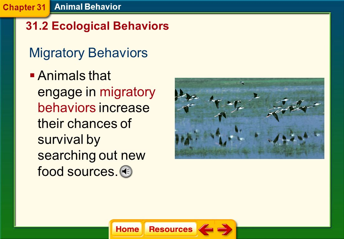 Chapter 31 Animal Behavior. 31.2 Ecological Behaviors. Migratory Behaviors.