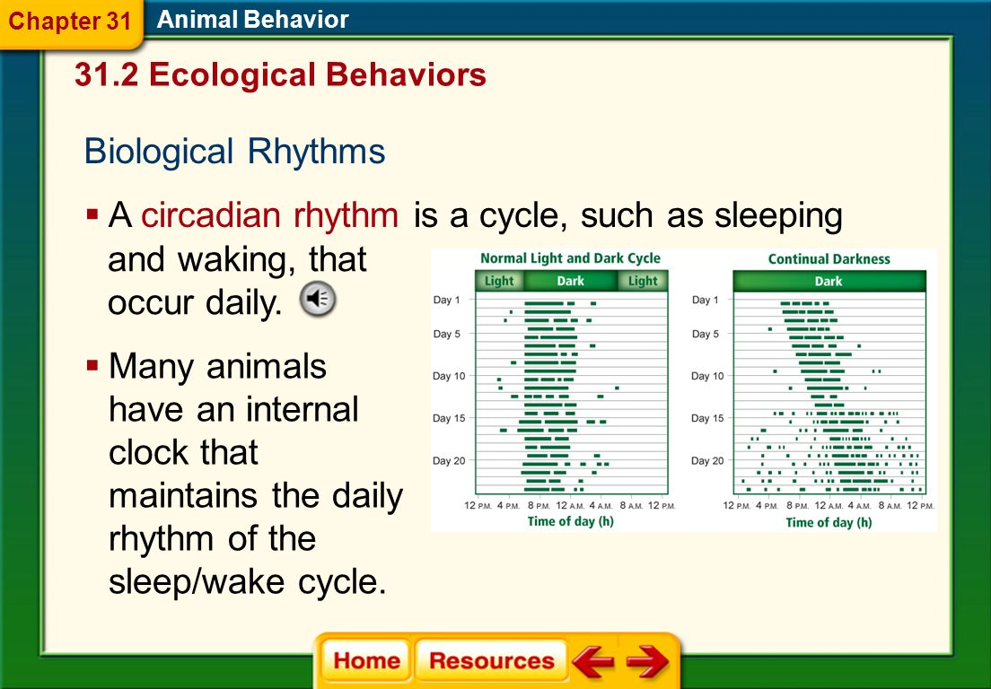 A circadian rhythm is a cycle, such as sleeping and waking, that