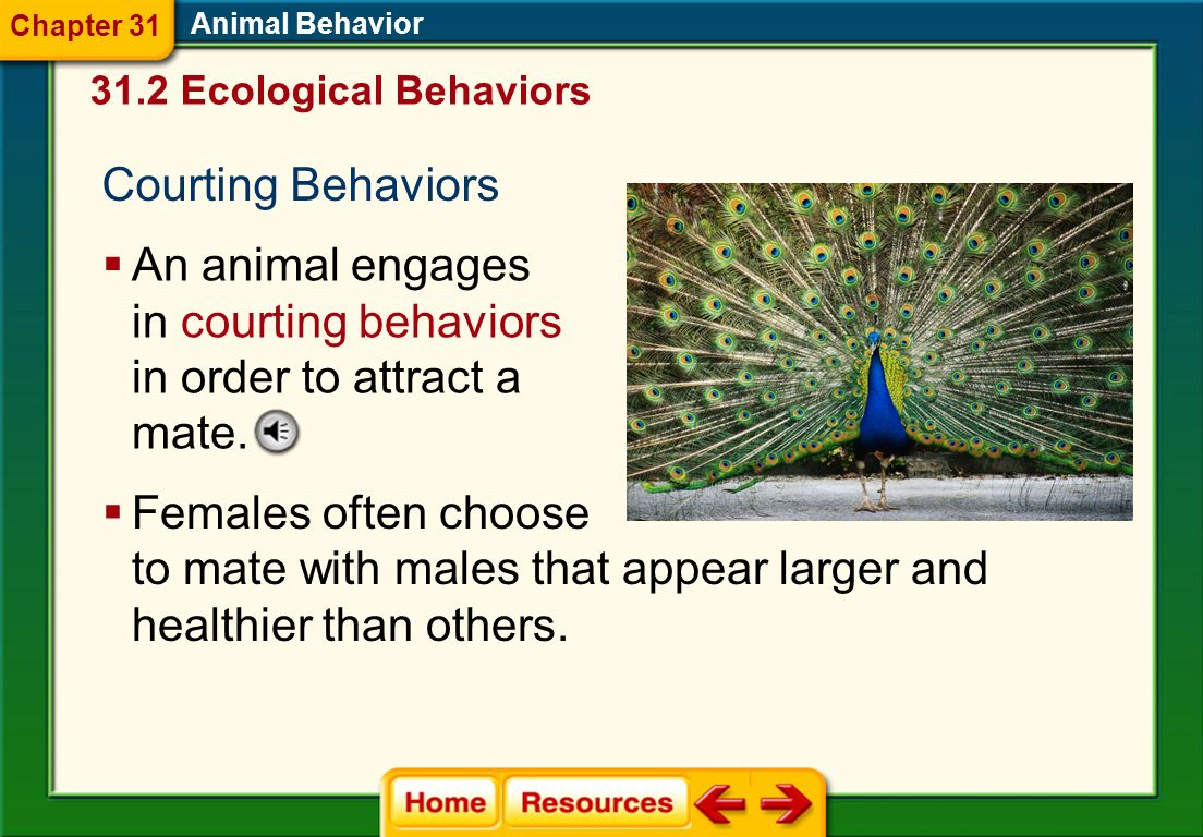 An animal engages in courting behaviors in order to attract a mate.