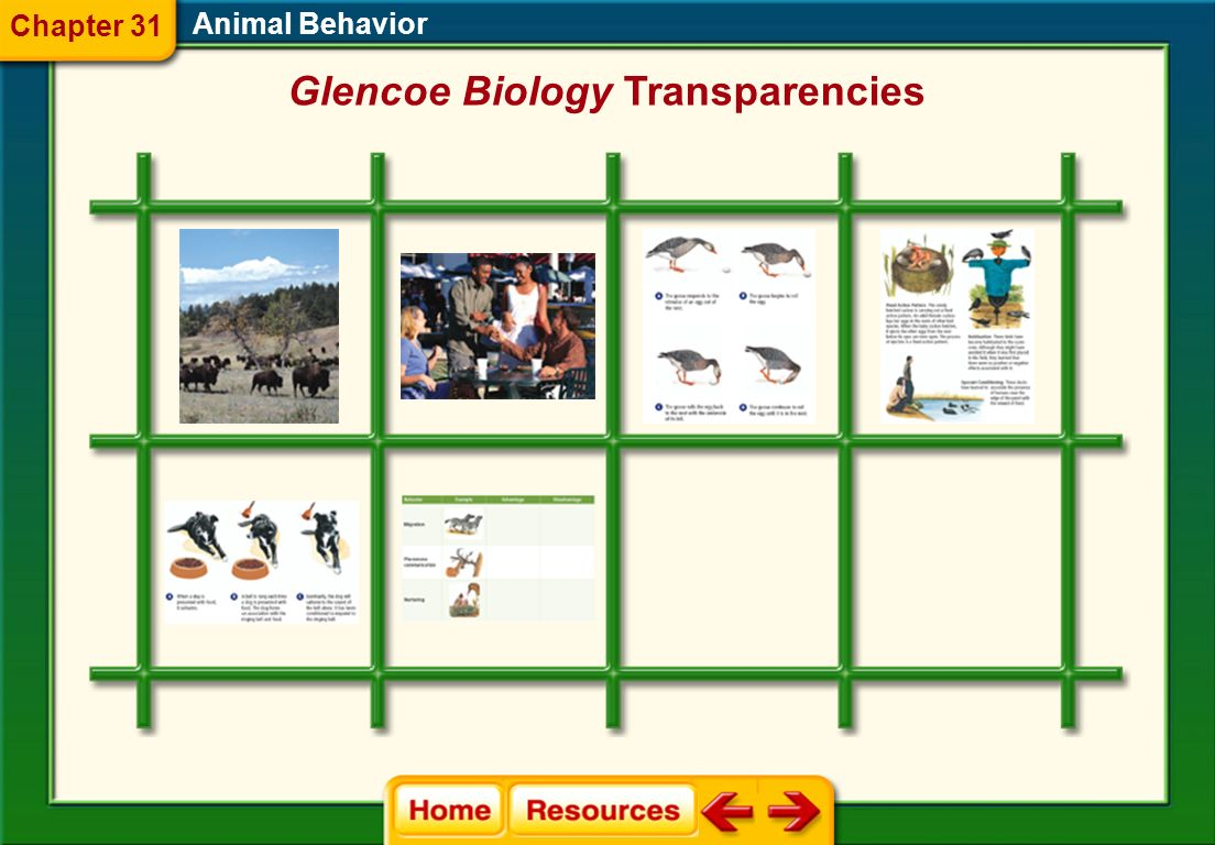 Glencoe Biology Transparencies