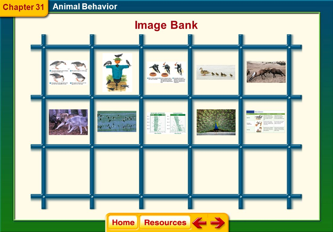 Chapter 31 Animal Behavior Image Bank