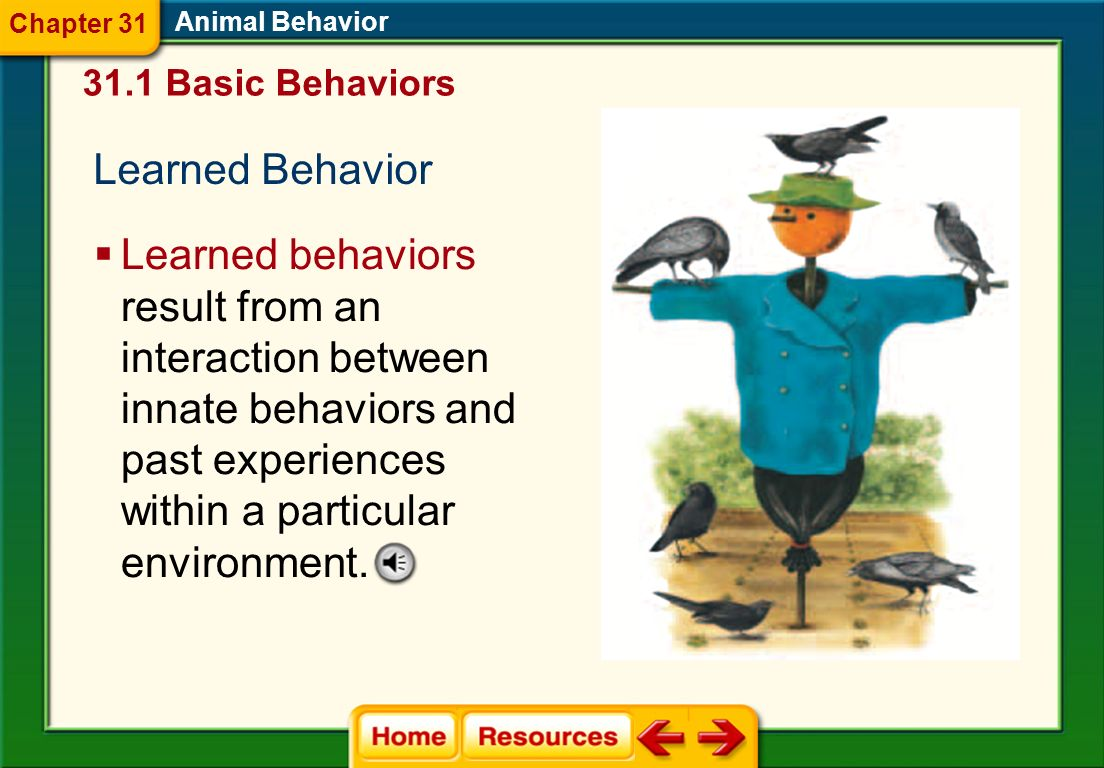 Chapter 31 Animal Behavior. 31.1 Basic Behaviors. Learned Behavior.