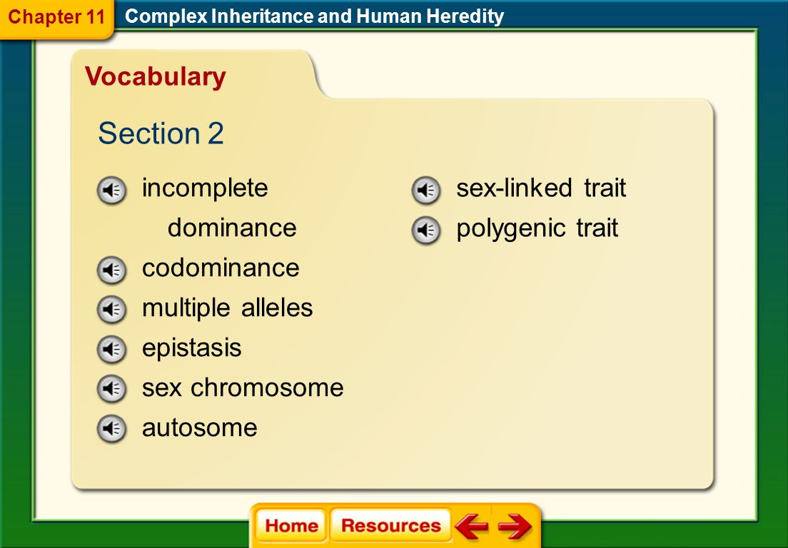 Section 2 Vocabulary incomplete dominance codominance multiple alleles
