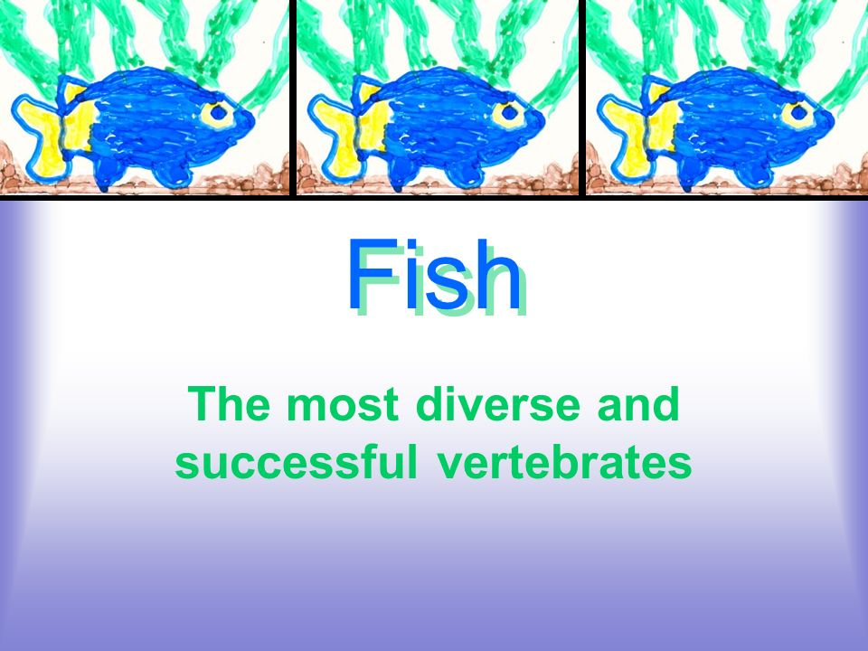 The most diverse and successful vertebrates