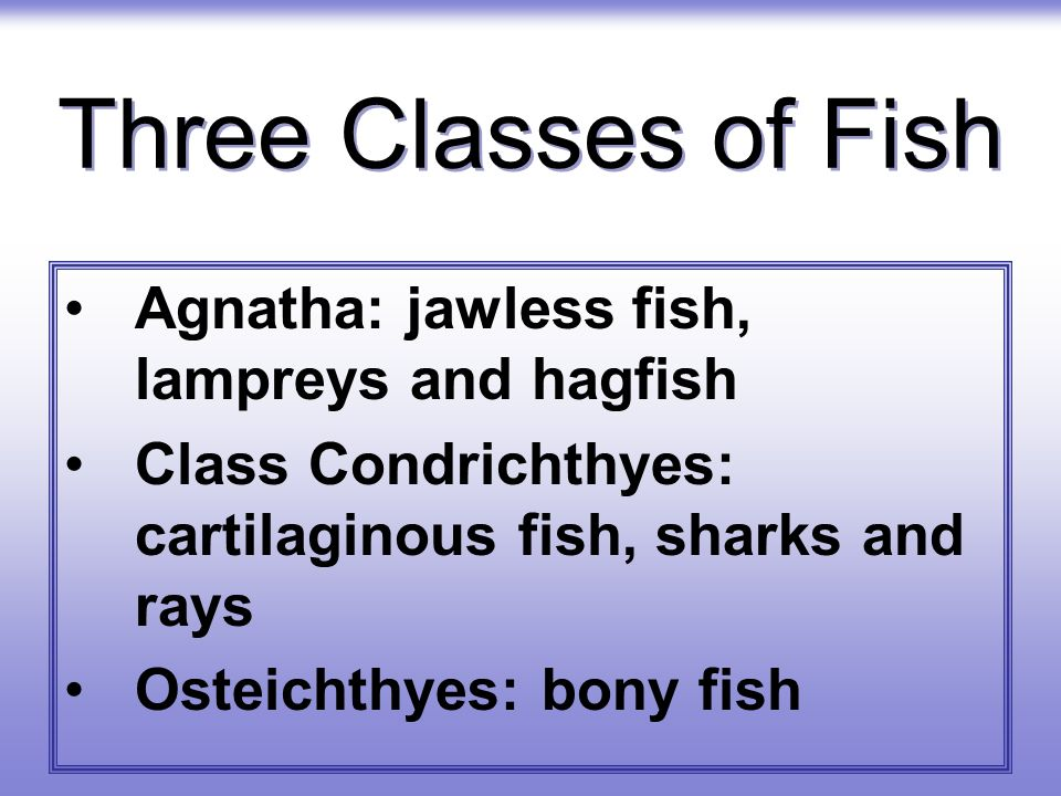 Three Classes of Fish Agnatha: jawless fish, lampreys and hagfish