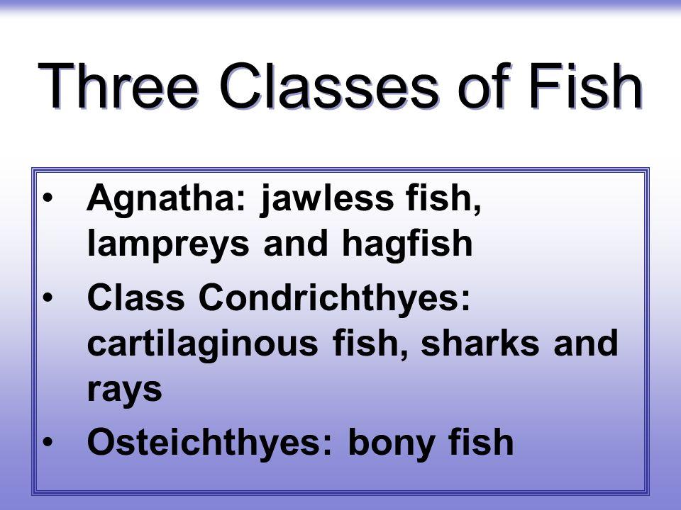 Three Classes of Fish Agnatha: jawless fish, lampreys and hagfish