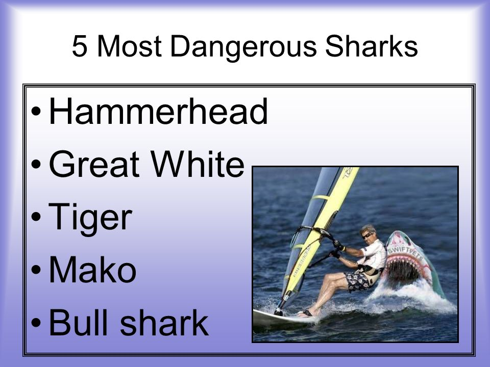 5 Most Dangerous Sharks Hammerhead Great White Tiger Mako Bull shark