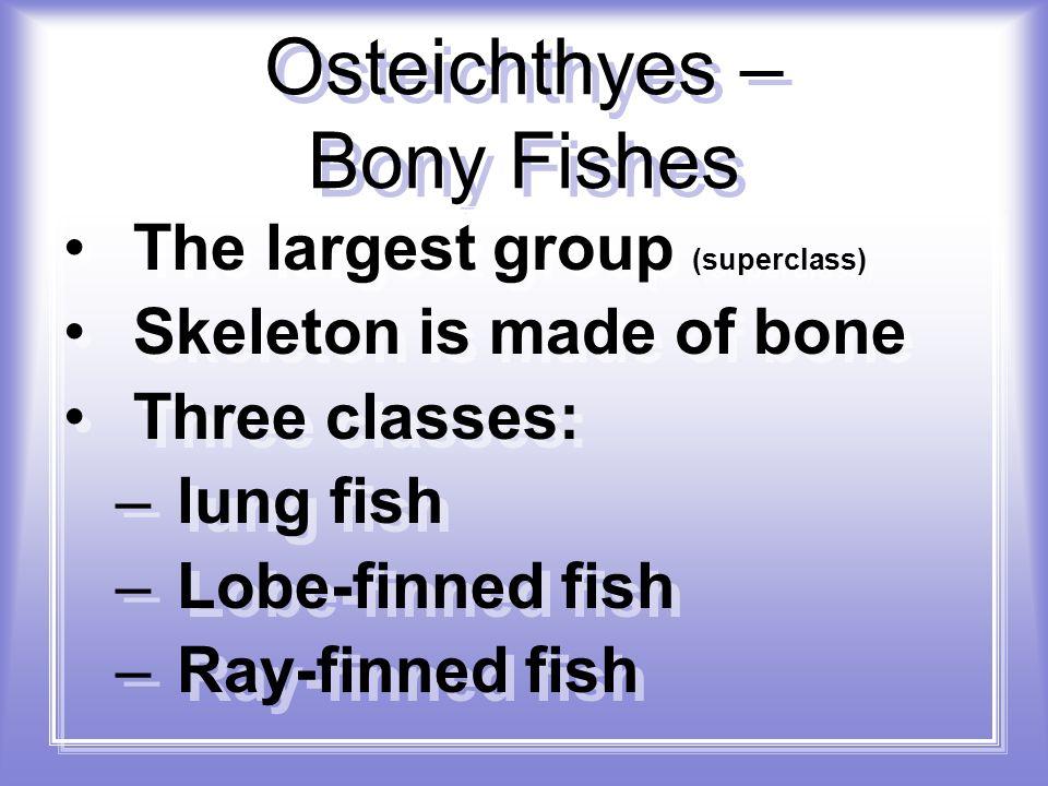 Osteichthyes – Bony Fishes
