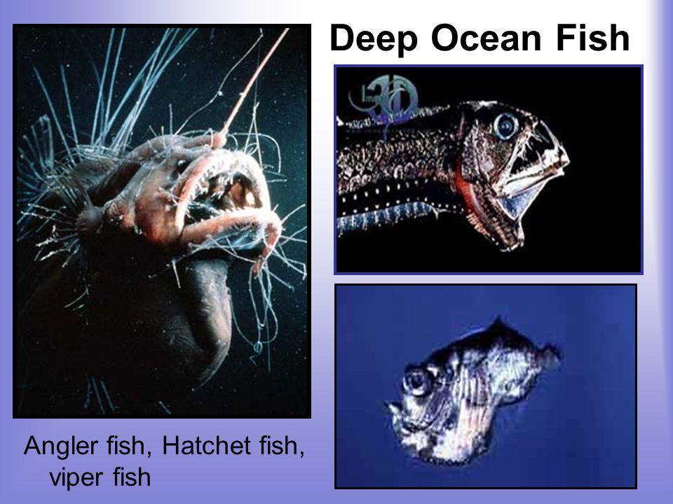 Deep Ocean Fish Angler fish, Hatchet fish, viper fish