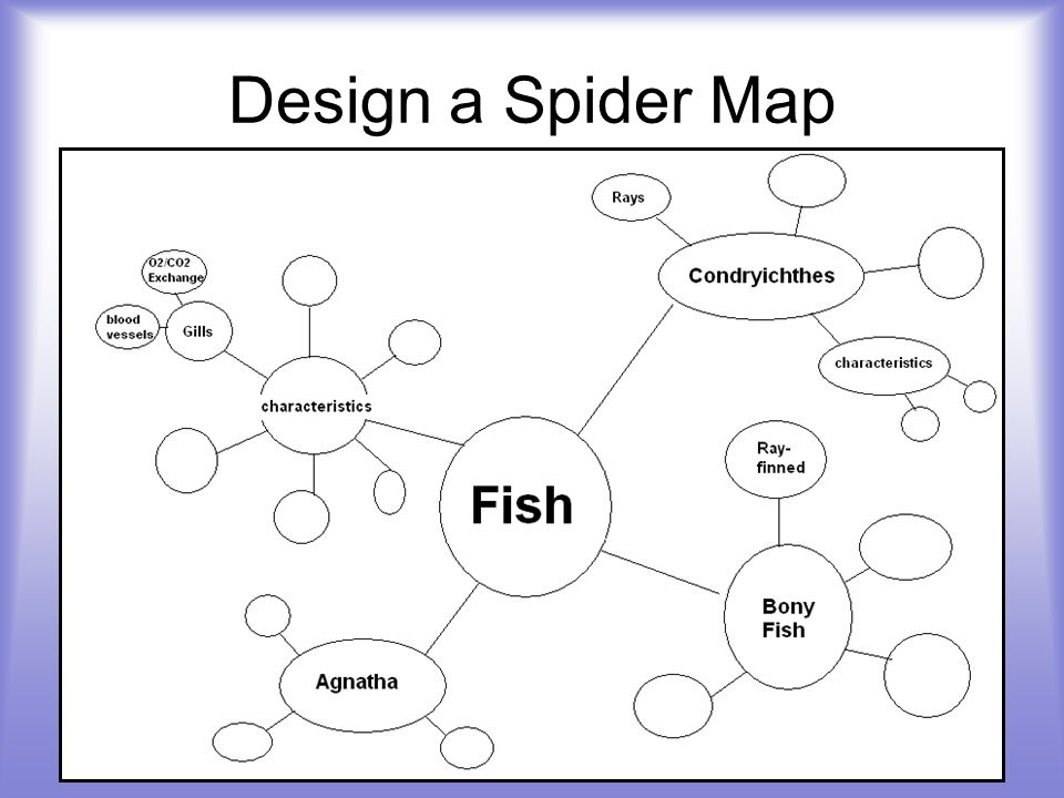 Design a Spider Map