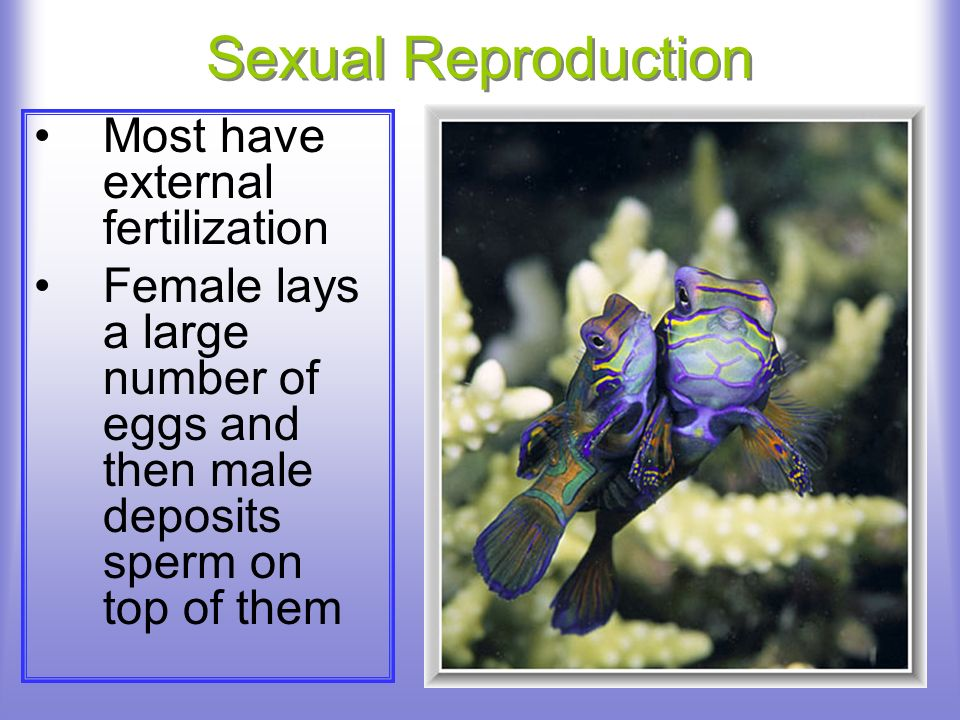 Sexual Reproduction Most have external fertilization