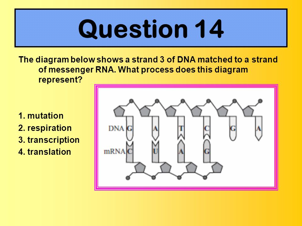 The Chemistry of DNA and Molecular Genetics - ppt download