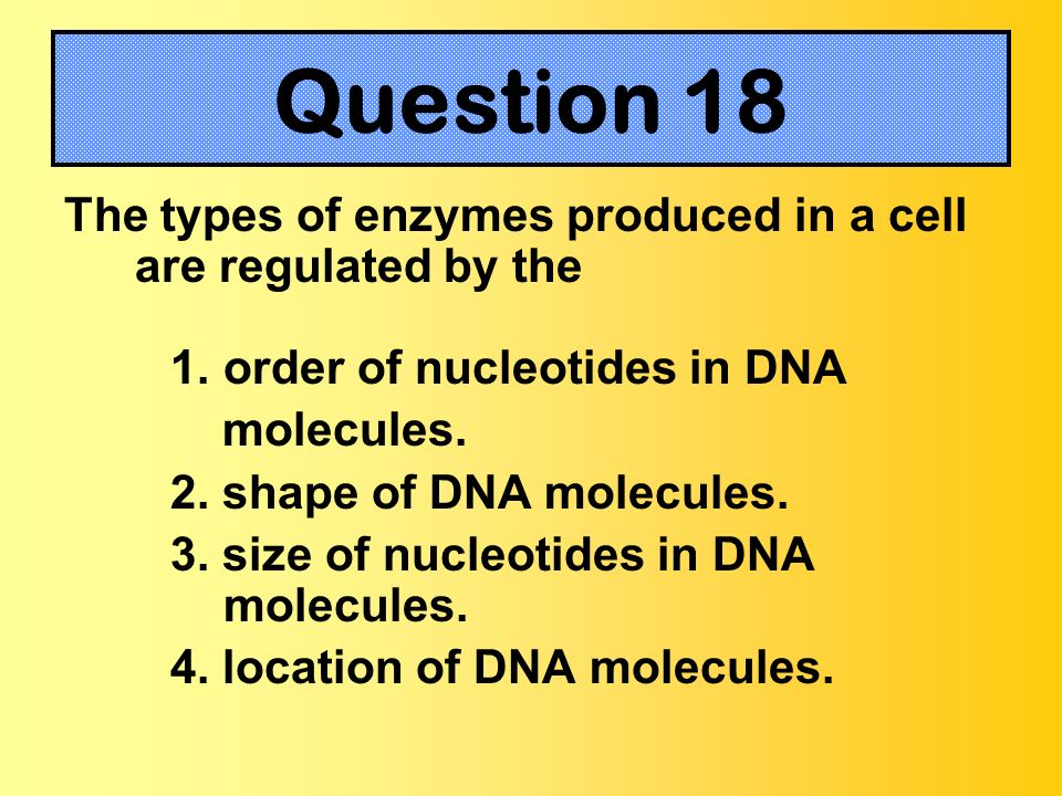 Question 18The types of enzymes produced in a cell are regulated by the. order of nucleotides in DNA.