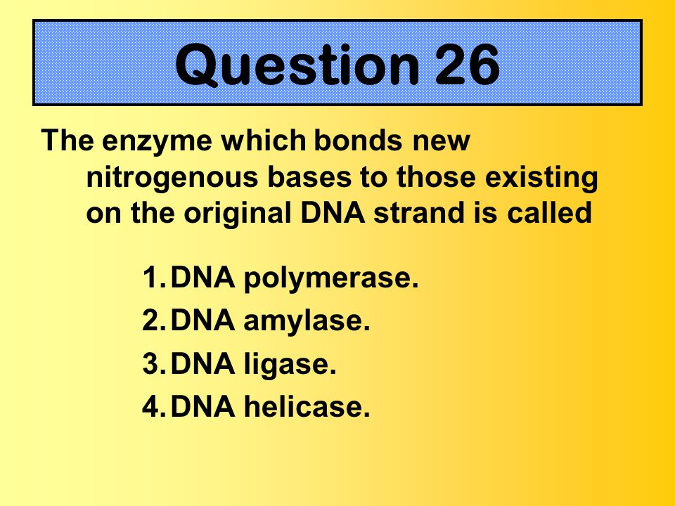 Question 26The enzyme which bonds new nitrogenous bases to those existing on the original DNA strand is called.