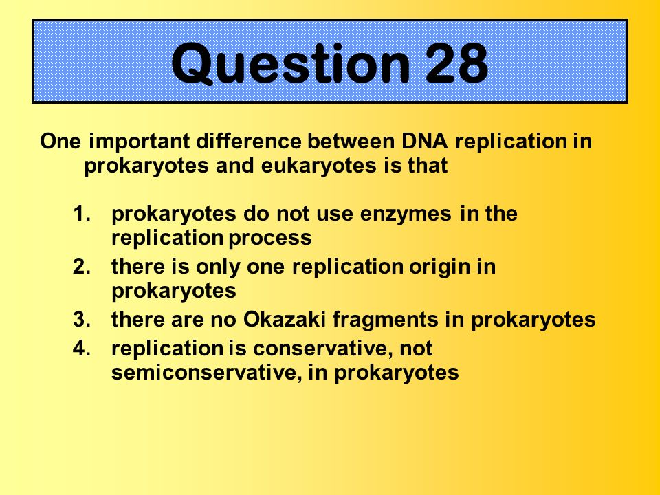 Question 28One important difference between DNA replication in prokaryotes and eukaryotes is that