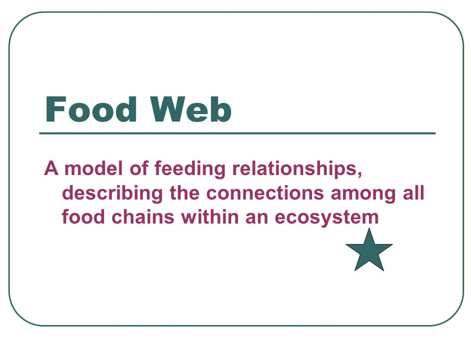Food Web A model of feeding relationships, describing the connections among all food chains within an ecosystem.