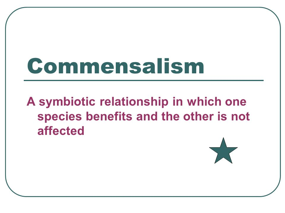 Commensalism A symbiotic relationship in which one species benefits and the other is not affected