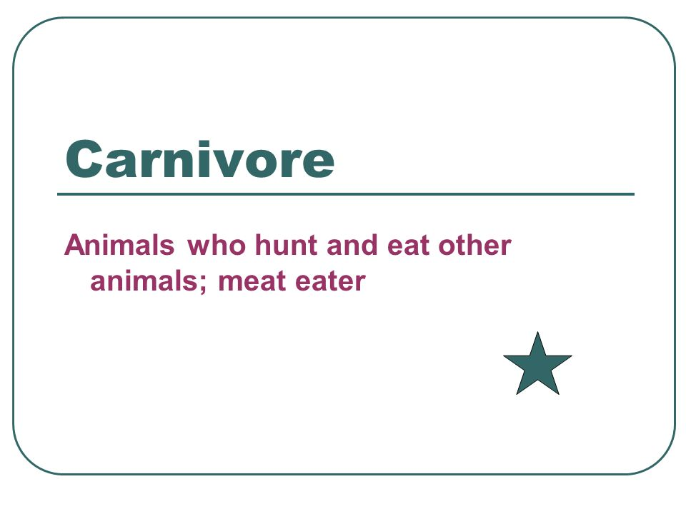 Carnivore Animals who hunt and eat other animals; meat eater