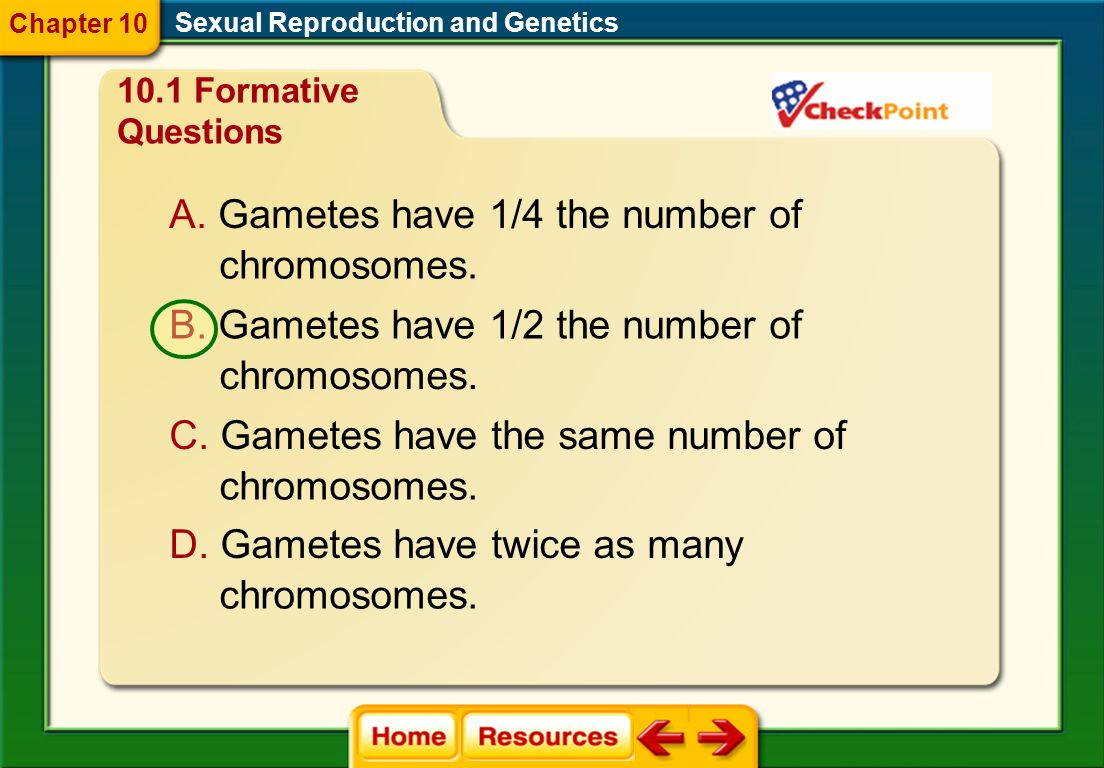 Gametes have 1/4 the number of chromosomes.