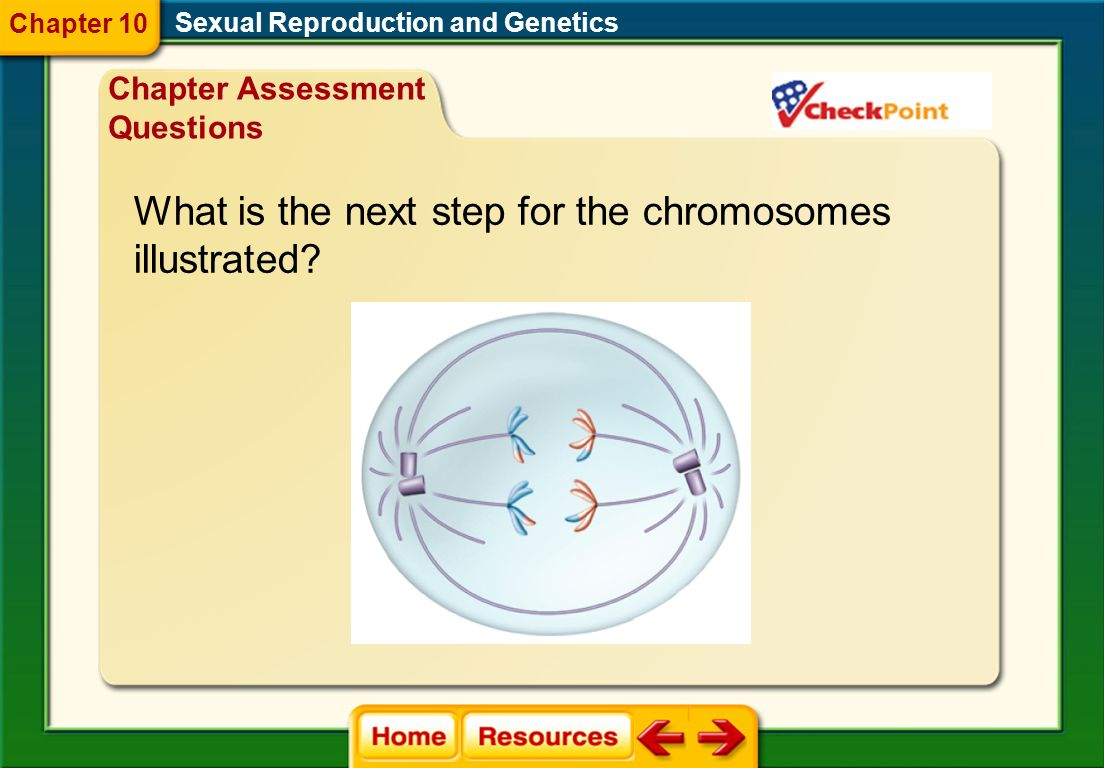 What is the next step for the chromosomes illustrated