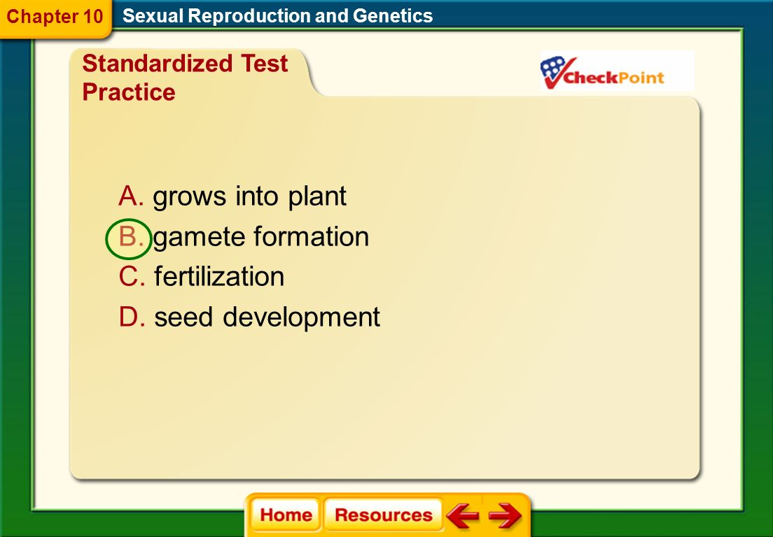 grows into plant gamete formation fertilization seed development