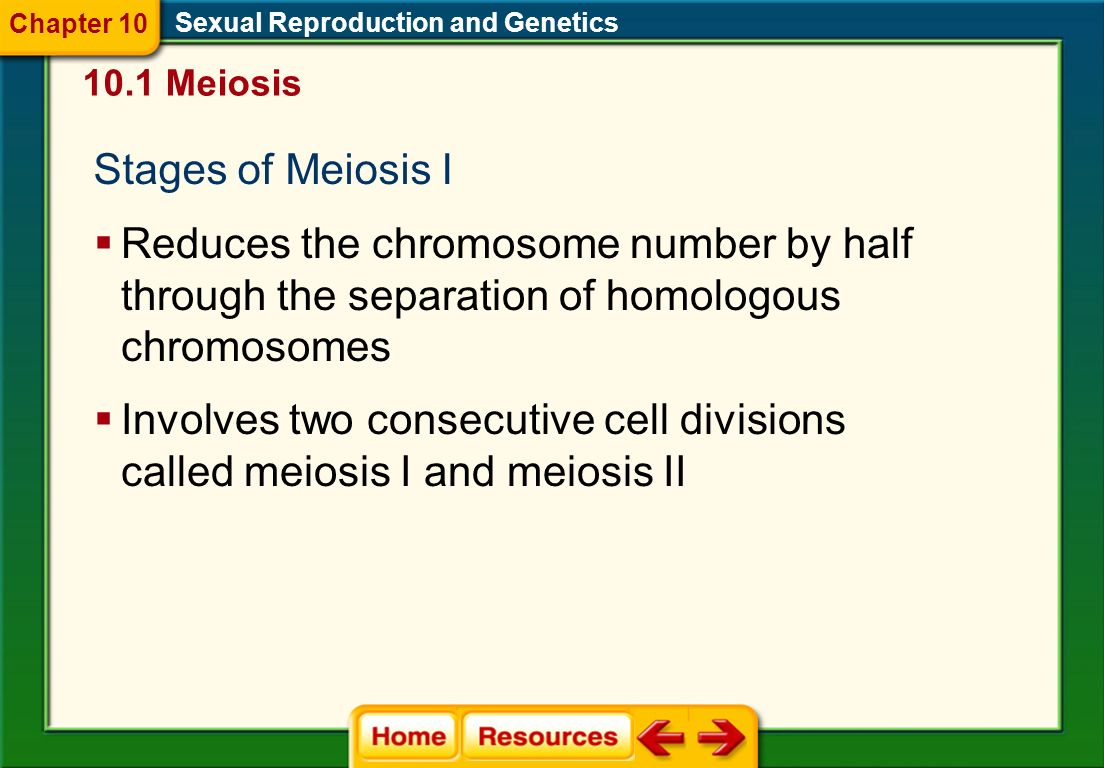 Chapter 10 Sexual Reproduction and Genetics Meiosis. Stages of Meiosis I.