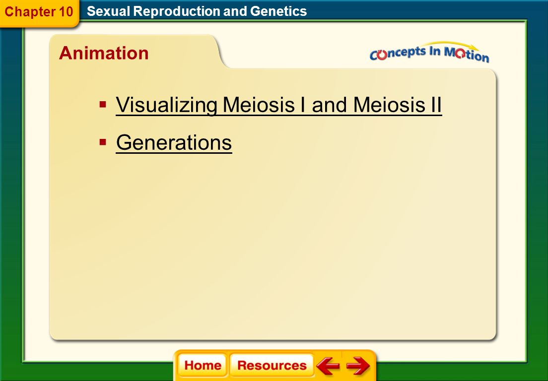 Visualizing Meiosis I and Meiosis II Generations