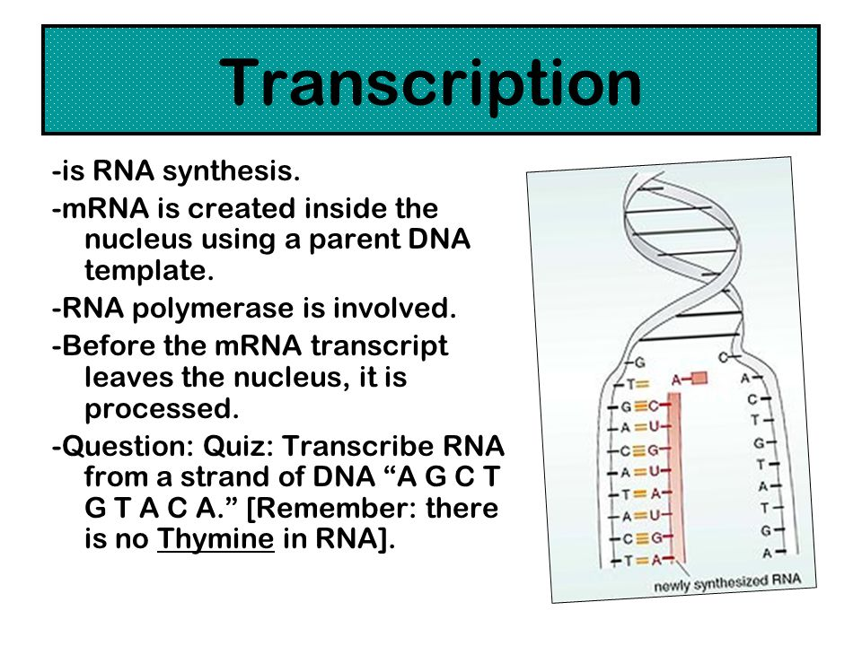 Transcription -is RNA synthesis.