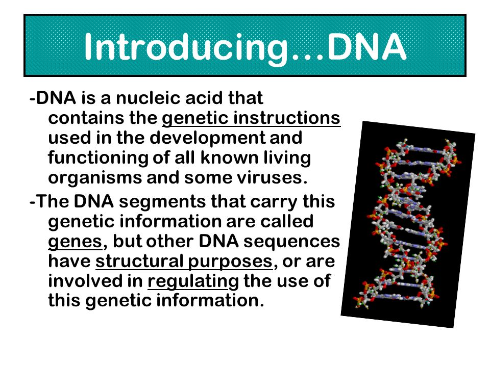 Introducing…DNA