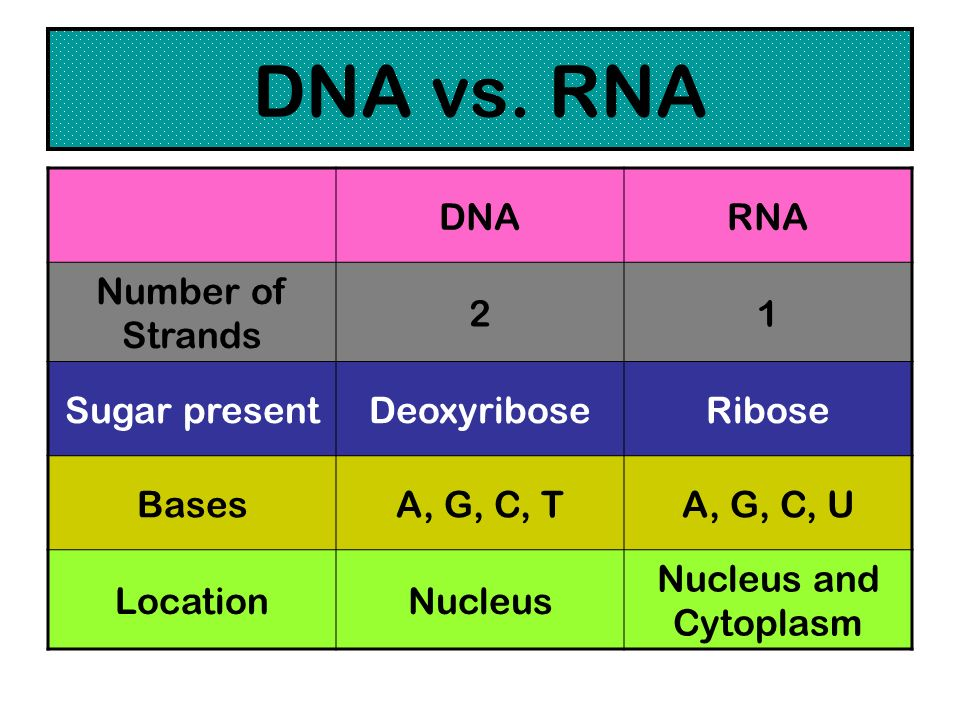DNA vs. RNA DNA RNA Number of Strands 2 1 Sugar present Deoxyribose