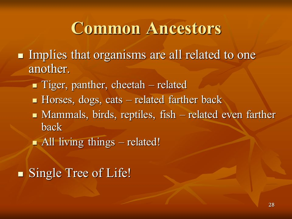 Common Ancestors Implies that organisms are all related to one another. Tiger, panther, cheetah – related.