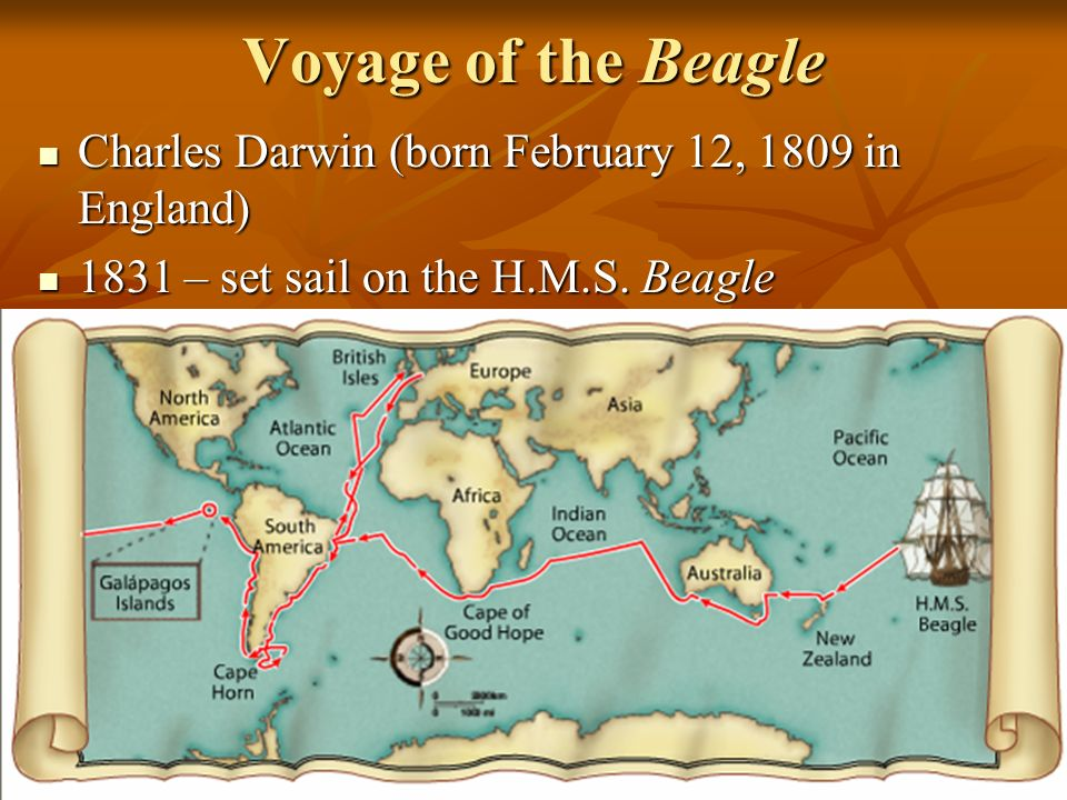 Voyage of the Beagle Charles Darwin (born February 12, 1809 in England) 1831 – set sail on the H.M.S.