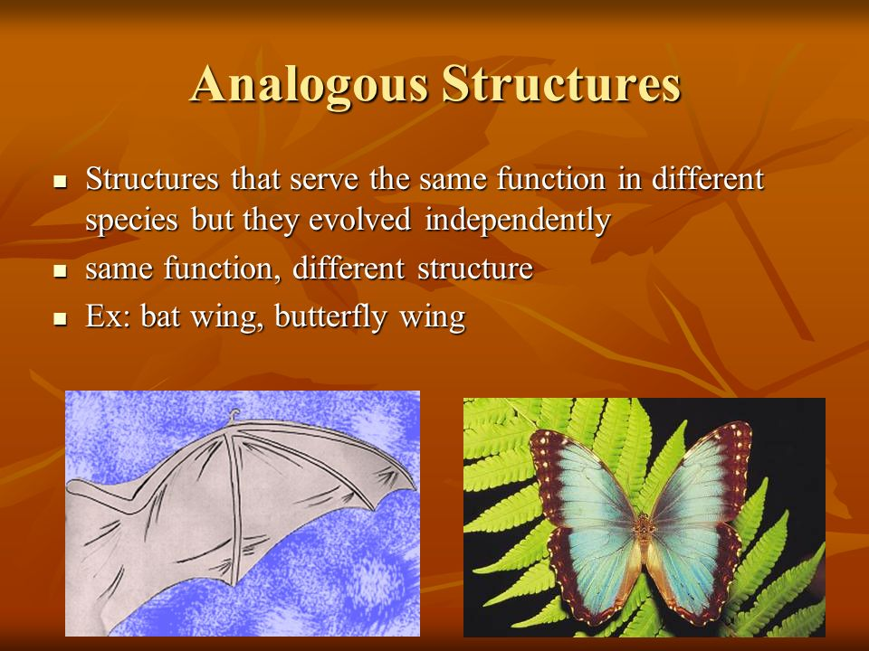 Analogous Structures Structures that serve the same function in different species but they evolved independently.