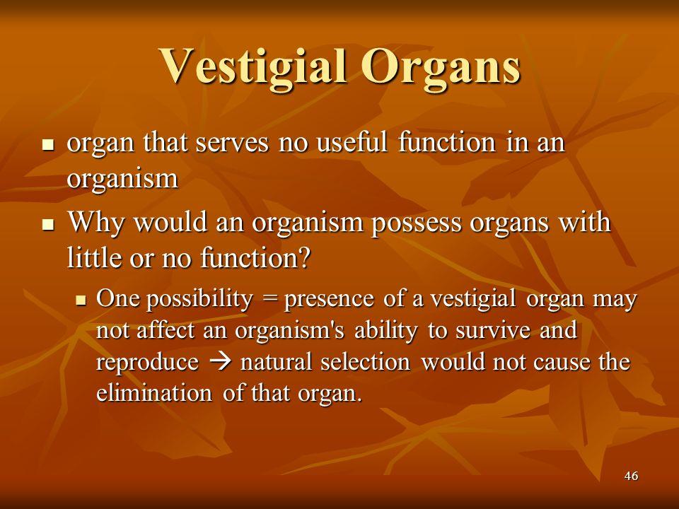 Vestigial Organs organ that serves no useful function in an organism
