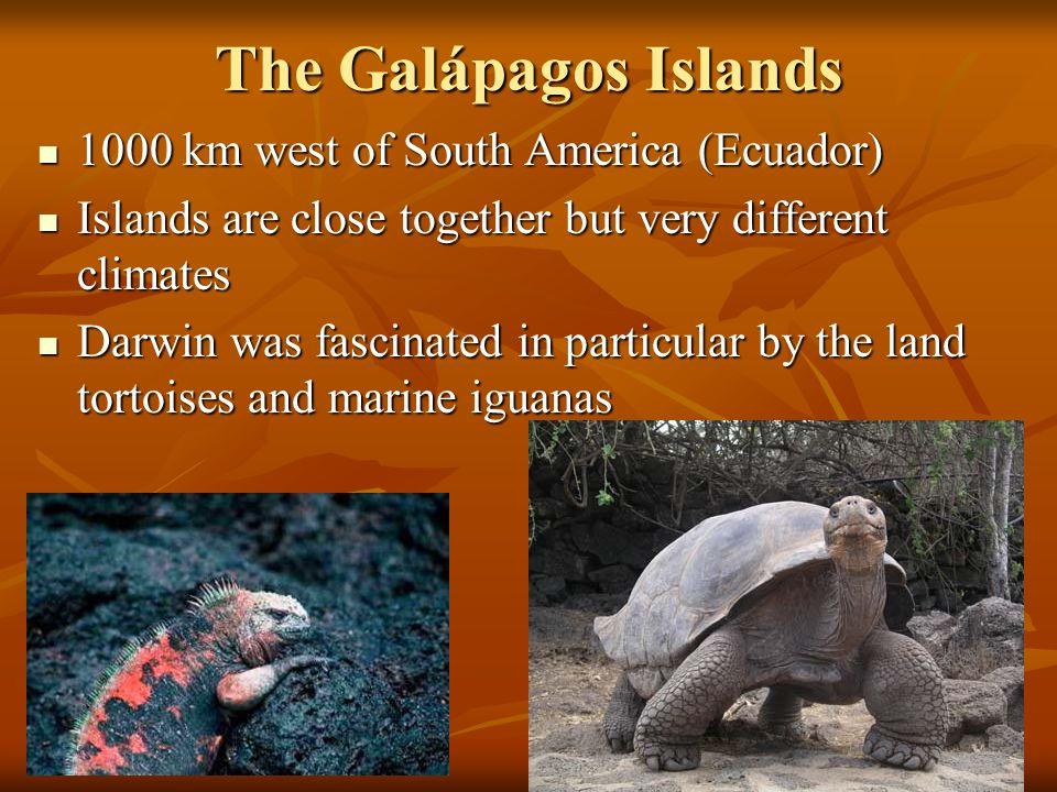 The Galápagos Islands 1000 km west of South America (Ecuador)