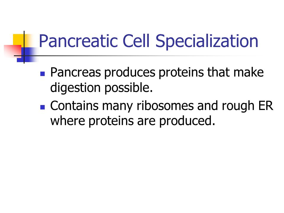 Pancreatic Cell Specialization
