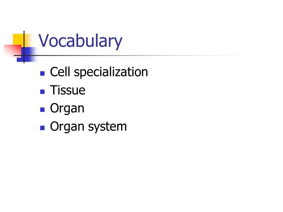 Vocabulary Cell specialization Tissue Organ Organ system