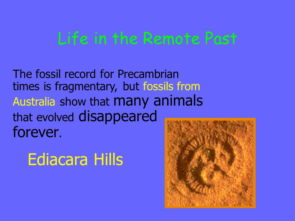 Life in the Remote Past Ediacara Hills